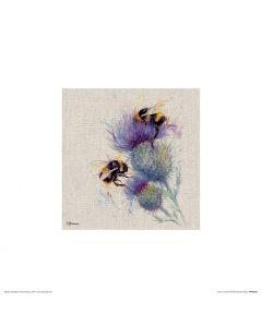 Bees on Thistle Art Print Jane Bannon 30x30cm