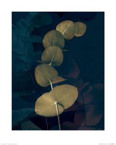 Dark Tropics I Art Print Ian Winstanley 40x50cm