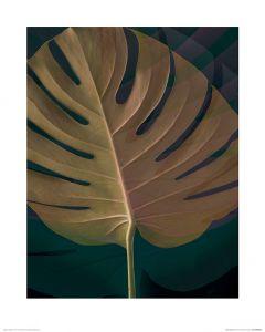Dark Tropics III Art Print Ian Winstanley 40x50cm