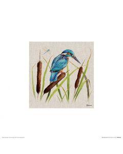 Kingfisher Art Print Jane Bannon 30x30cm