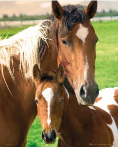 Horses Mare and Foal Poster 40x50cm
