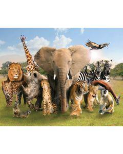 Wild Animals Poster 40x50cm