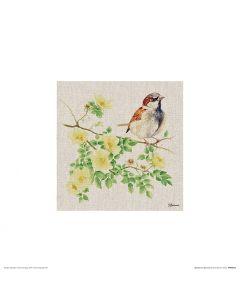 Sparrow Art Print Jane Bannon 30x30cm