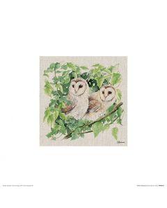 Two Owls Art Print Jane Bannon 30x30cm