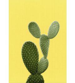 Cactus On Yellow