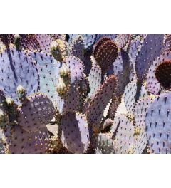 Mess o'Cactus #2