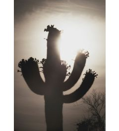 Saguaro Sunrise #10