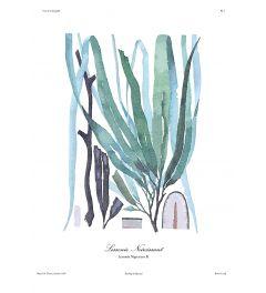 French Kelp - Blue