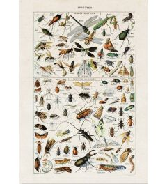 Insects Art