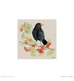 Blackbird Art Print Jane Bannon 30x30cm