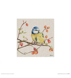 Blue Tit Art Print Jane Bannon 30x30cm