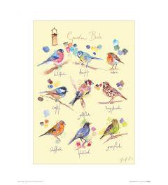 Garden Birds Art Print Jennifer Rose 30x40cm