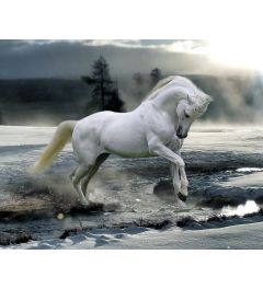 Bob Langrish Horse Snow Poster 40x50cm