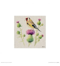 Goldfinch on Thistle Art Print Jane Bannon 30x30cm