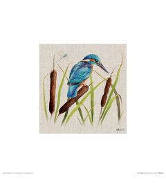 Kingfisher Art Print Jane Bannon 30x30cm