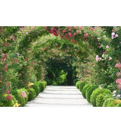Pink Floral Arch 7-part Wall Mural 350x260cm