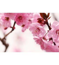 Pink Blossom 7-piece Photo wallpaper 350x260cm