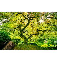 Japanese Maple 7-piece Photo wallpaper 350x260cm