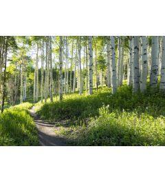 Birch Hiking Trail 7-piece Photo wallpaper 350x260cm