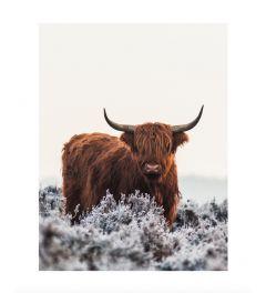 Scottish Highlander Art Print