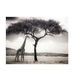 Giraffe On The Savannah Art Print