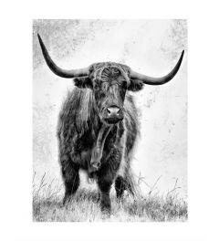 Scottish Highlander B&W Art Print