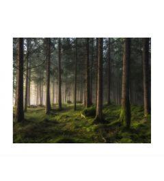 Pinetree Forest Art Print