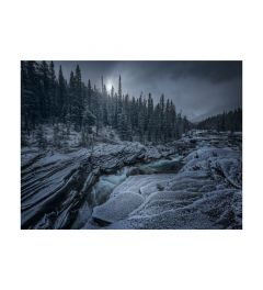 Icy Forest Art Print