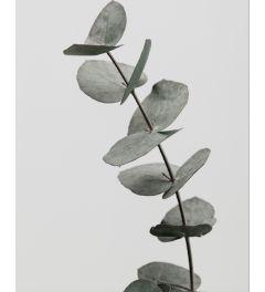 Eucalyptus 3 Art Print