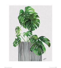 Summer Thornton Swiss Cheese Plant Art Print 40x50cm