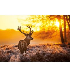 Golden Stag Poster 61x91.5cm