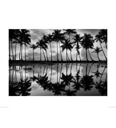 Palm Reflection in Black and White Art Print Dennis Frates 60x80cm