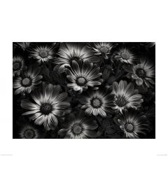 Perfect Flowers in Black and White Art Print Dennis Frates 60x80cm