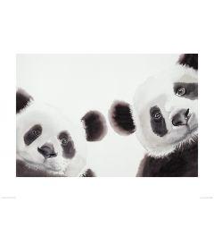 Two Giant Pandas Art Print Aimee Del Valle 60x80cm
