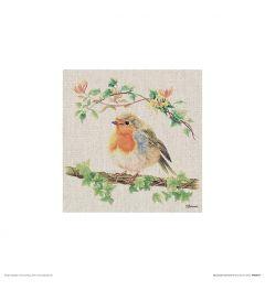 Robin Art Print Jane Bannon 30x30cm