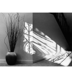 Gower Road Shadows