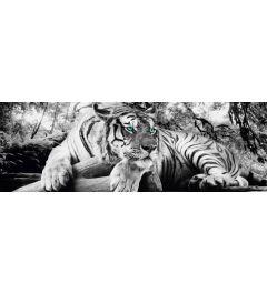 Tiger - Green Eyes